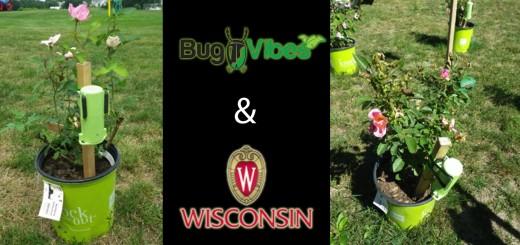 BugVibes™ and UWM